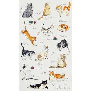 Madeleine Floyd Cats