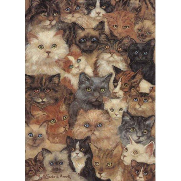 Dobbelt kort<br>Cat World