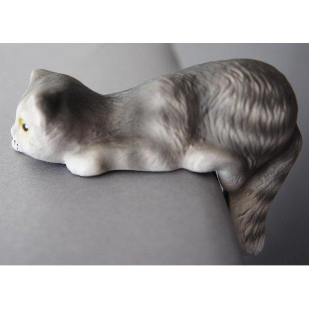 Lille nysgerrig grå kat