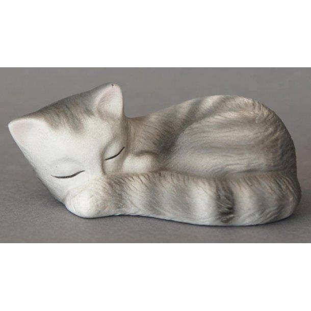 Lille grå kat ligger og sover