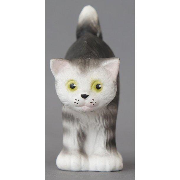 Lille grå kat skyder ryg