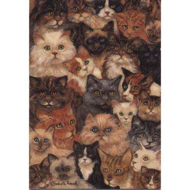 Kønne kattehoveder
