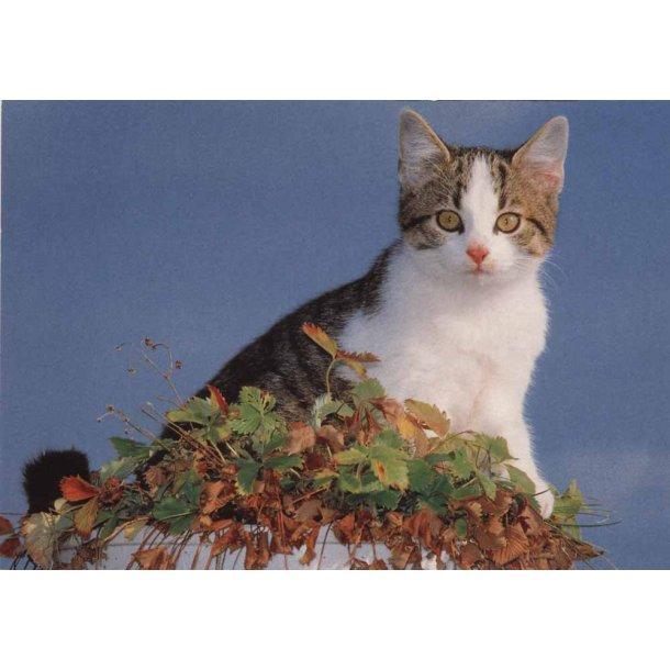 Kat i jordbærbed