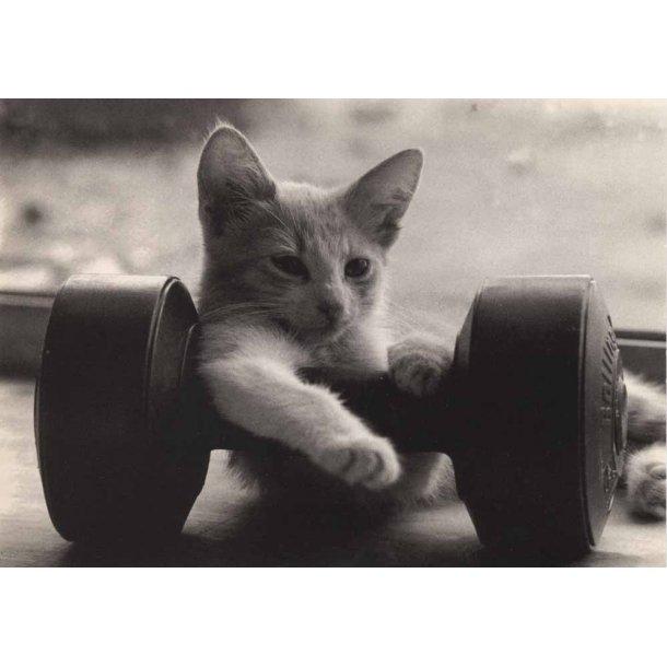 Fitness-kat