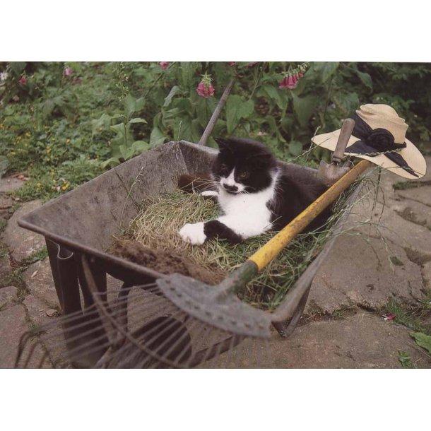 Kat på havearbejde