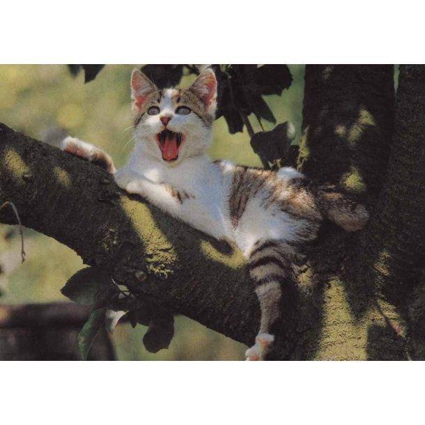 Højt på en gren