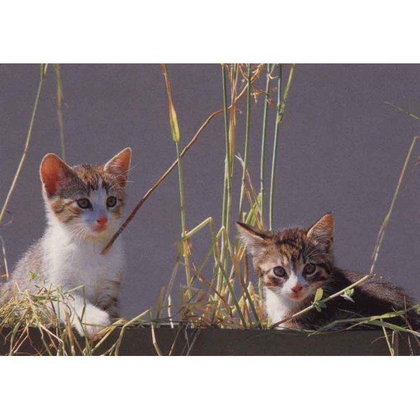 To killinger i højt græs
