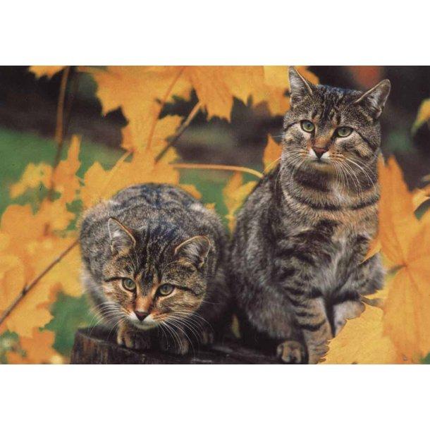 To nysgerrige katte