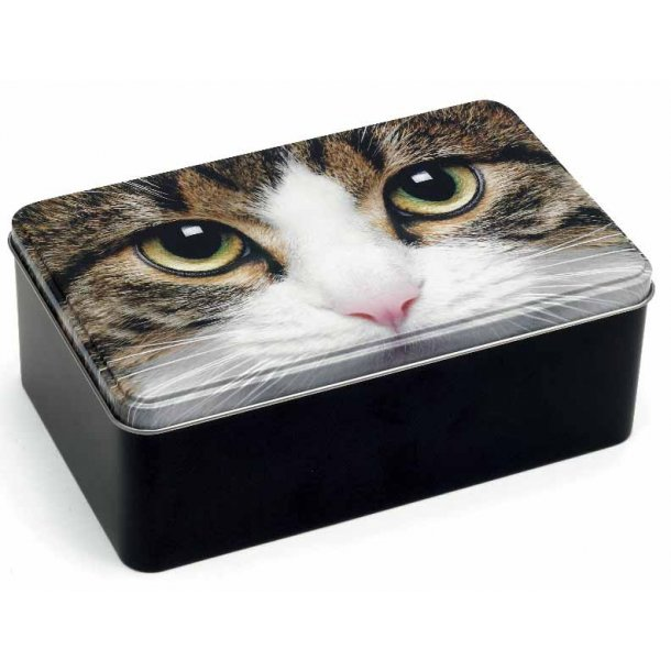 Tabby Cat stor æske