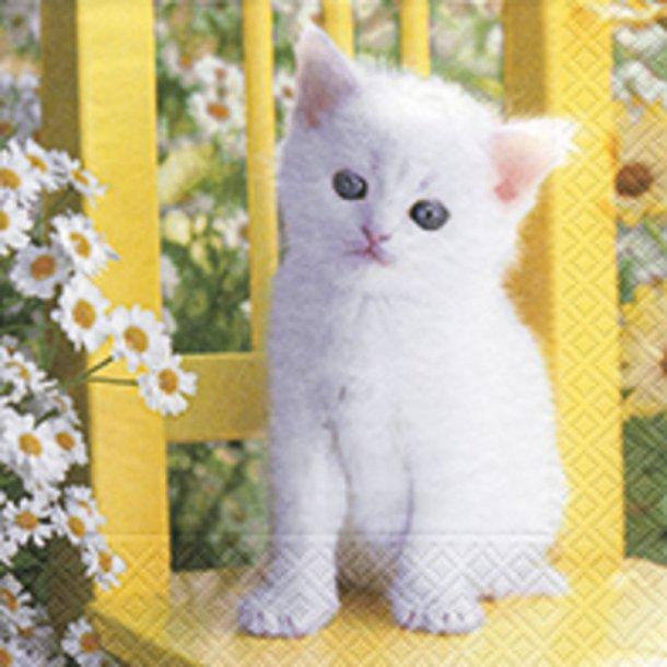 White Kitten - So cute