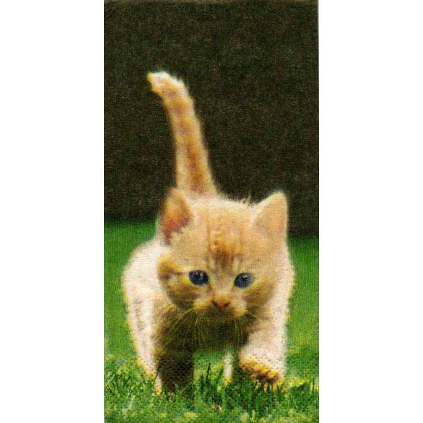 Runaway Kittens<br>Papirlommetørklæde
