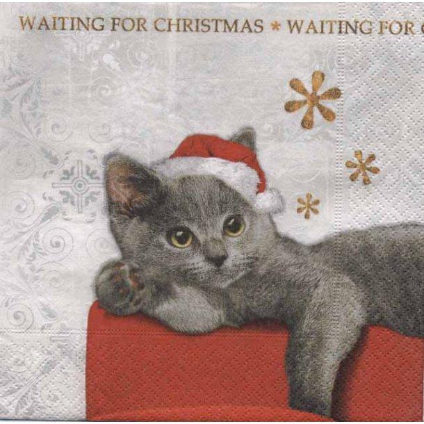 Christmas Cat juleserviet