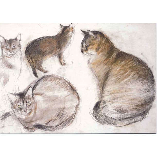 Dobbelt kort<br>Studies of an Abyssinian Cat